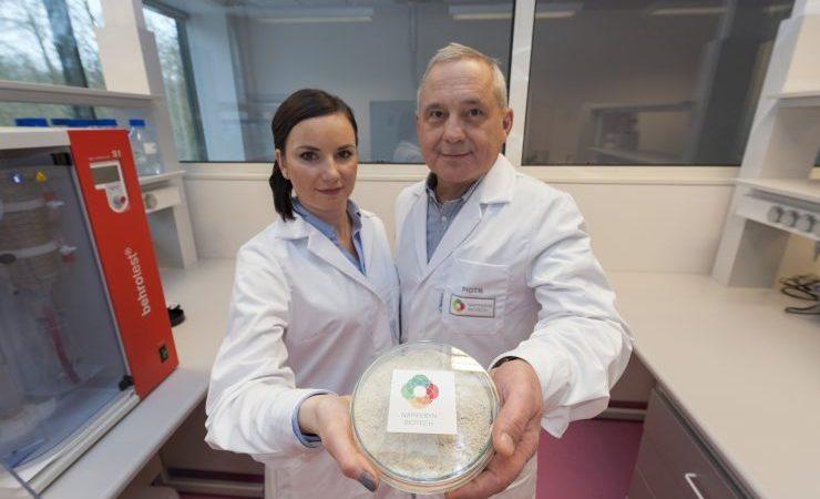 Nowy rodzaj białka roślinnego będzie produkowany na Dolnym Śląsku